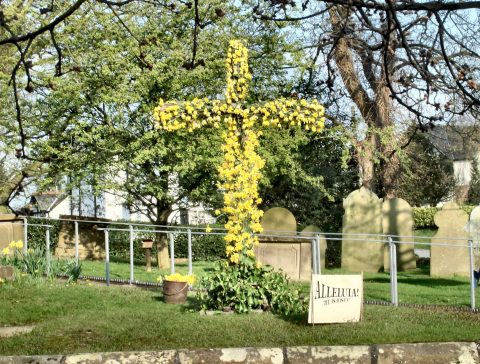 A cross of daffodils in the graveyard at St Luke's Church Goostrey at Easter