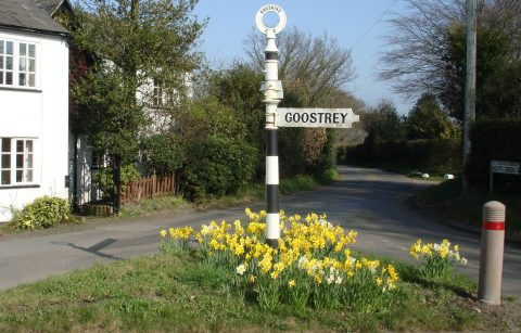 Photo of Goostrey Fingerpost surrounded by daffodils