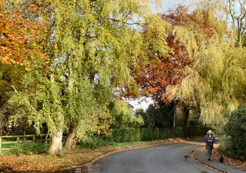 view of a woman walking her dog on Mill Lane in Autumn