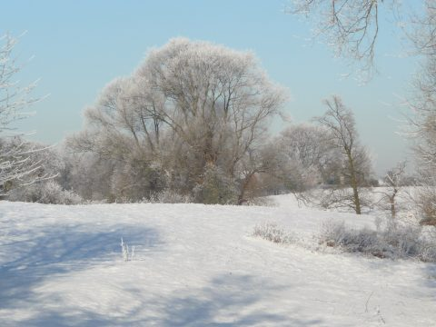 view of trees in the snow across the fields